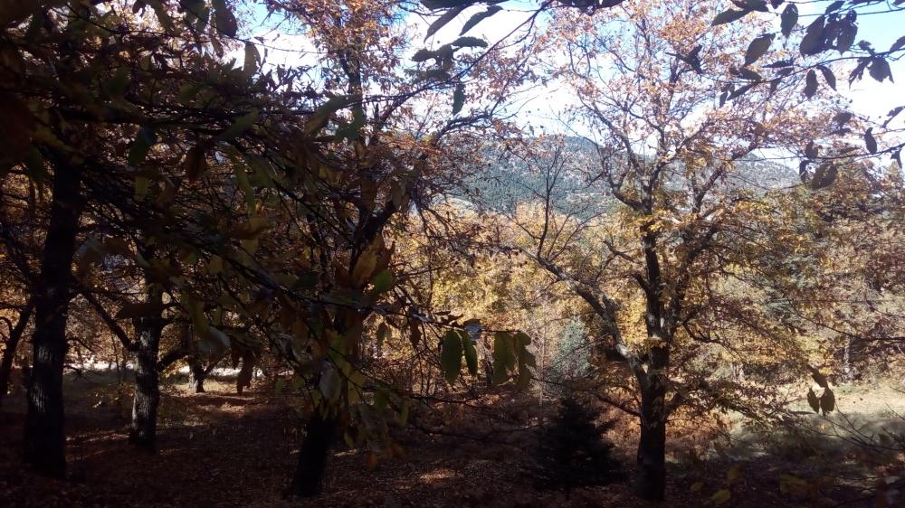 Στο-χωριό-του-Φθινοπώρου